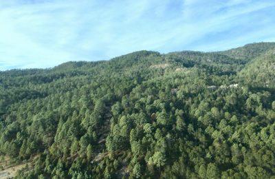 Breves cometarios a la subsanación de infracciones administrativas a propósito del artículo 6 del Reglamento de Infracciones y Sanciones en Materia Forestal y de Fauna Silvestre